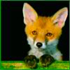 foxrocco